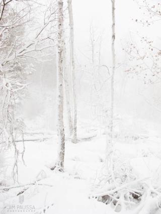Paussa-aspen-winter